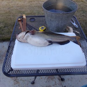 "22 "" Channel catfish"